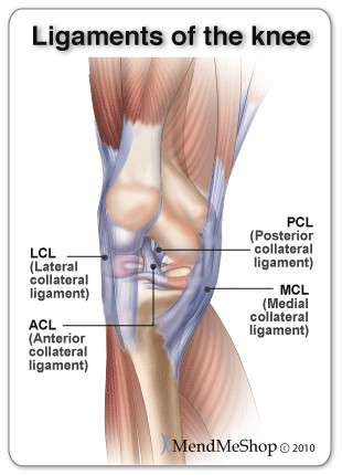what's the difference between a tendon & ligament injury?, Human Body